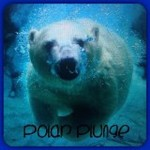 polar plunge seasonal
